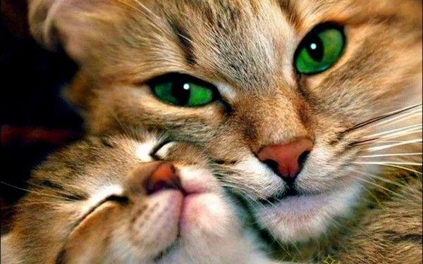 Fond ecrand animaux domestique - Chat tout mignon ...